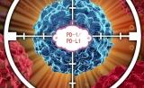 再生元/赛诺菲PD-1抑制剂2期临床结果积极
